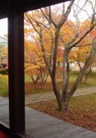 妙覚寺の庭